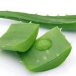сочное растение